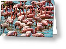 Flamboyance Of Flamingos Greeting Card