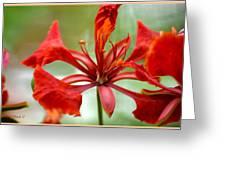 Flamboyant Beauty Greeting Card