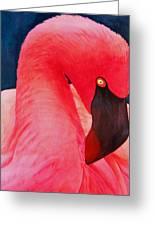 Flamboyant Flamingo Greeting Card