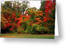Flamboyant Forest Greeting Card
