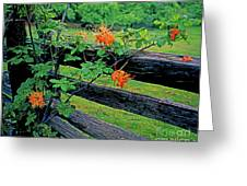 Flame Azalea And Fence Greeting Card