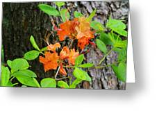 Flame Azaleas Greeting Card