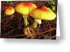 Flame Pluteus Mushroom  Greeting Card