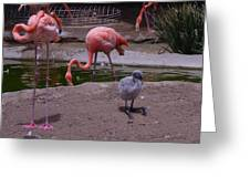 Flamgos 3 San Diego Zoo Greeting Card