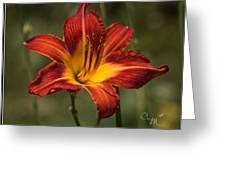 Flaming Lily Greeting Card