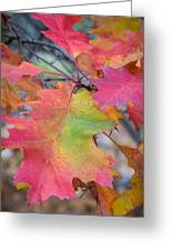 Flaming Oak Greeting Card