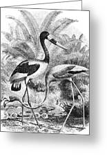 Flamingo & Jabiru Greeting Card