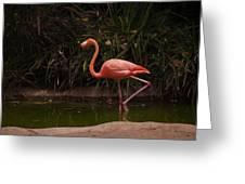 Flamingo 1 San Diego Zoo Greeting Card