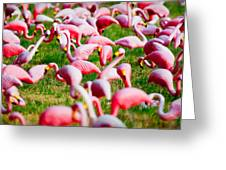 Flamingo 6 Greeting Card