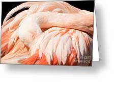 Flamingo Abstract Greeting Card