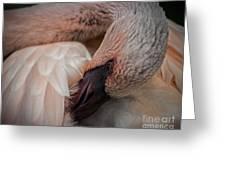 Flamingo Artful Pose Greeting Card