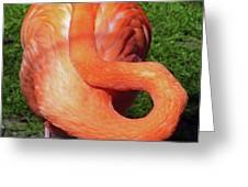 Flamingo Asleep Greeting Card