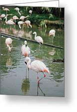 Flamingo Bath  Greeting Card