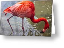 Flamingo Greeting Card