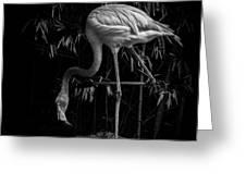 Flamingo Classic Bw Greeting Card