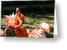 Flamingo Colony Greeting Card
