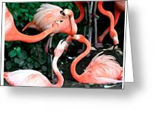 Flamingo Dance Greeting Card