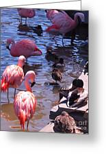 Flamingo Family  Greeting Card
