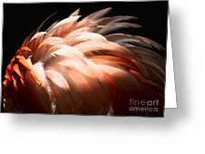 Flamingo Feathers Greeting Card