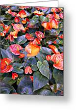 Flamingo Flower Bed Greeting Card