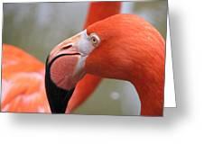 Flamingo Folly Greeting Card