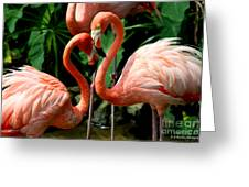 Flamingo Heart Greeting Card