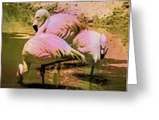 Flamingo - Id 16217-202804-4625 Greeting Card