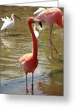 Flamingo II Greeting Card