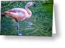 Flamingo In Still Waters Greeting Card
