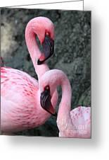 Flamingo Love Birds Greeting Card
