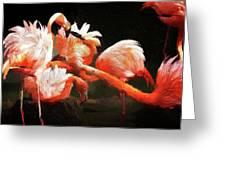 Flamingo Mingles Greeting Card