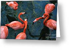Flamingo Party 1 Greeting Card