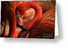 Flamingo Poised Greeting Card