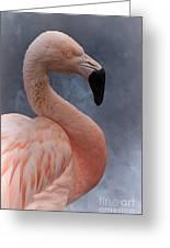 Flamingo Profile Greeting Card