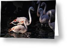 Flamingo Study - 2 Greeting Card