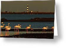 Flamingo Sunrise Greeting Card