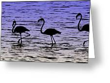 Flamingo Walk - Venezuela Greeting Card