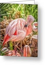 Flamingo2 Greeting Card