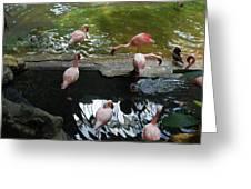 Flamingoes At The Zoo Greeting Card