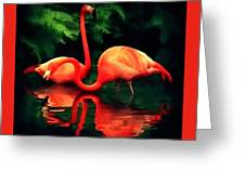 Flamingos - 1 H B Greeting Card