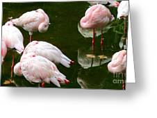 Flamingos 10 Greeting Card