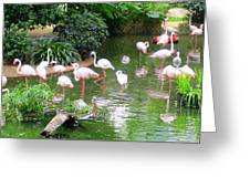 Flamingos 4 Greeting Card