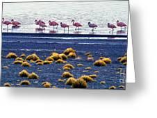 Flamingos At Torres Del Paine Greeting Card