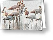 Flamingos Family Greeting Card