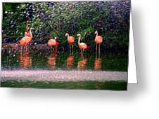Flamingos II Greeting Card