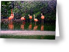 Flamingos II Greeting Card