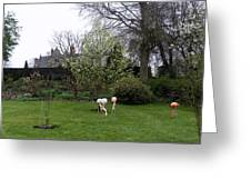 Flamingos On The Lawn Greeting Card