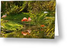 Flamingos Wading Greeting Card