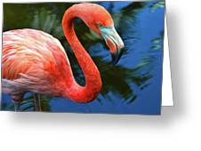 Flamingo Wading In Pond Greeting Card