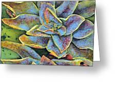 Flashy Succulent Greeting Card